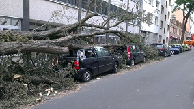 tree-plant-road-street-car-parking-837635-pxhere.com