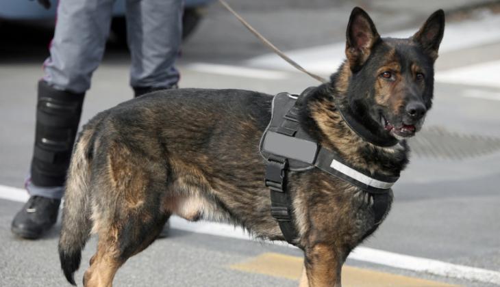 Juiz autoriza a utilização de drogas apreendidas pela Polícia Militar para o treinamento de cães farejadores